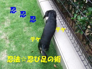blog716hina05.jpg