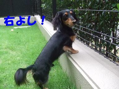 blog716hina06.jpg