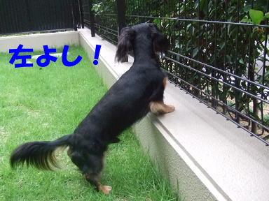 blog716hina07.jpg