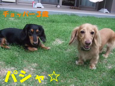 blog716hina08.jpg