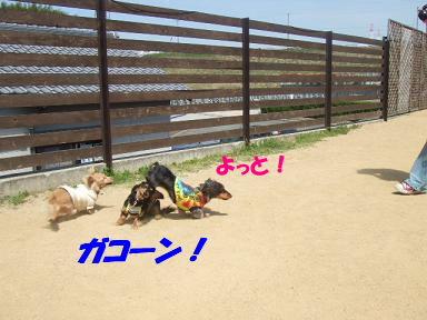 bloga-s09.jpg