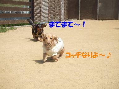 bloga-s10.jpg