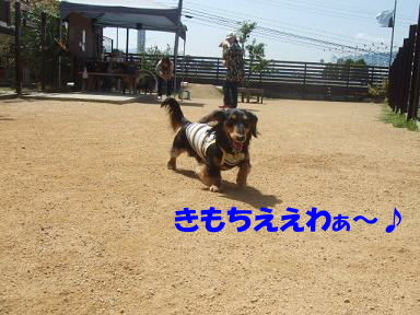 bloga-s13.jpg
