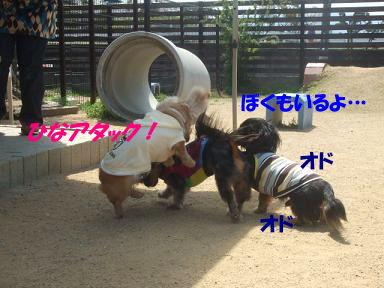 bloga-s21.jpg