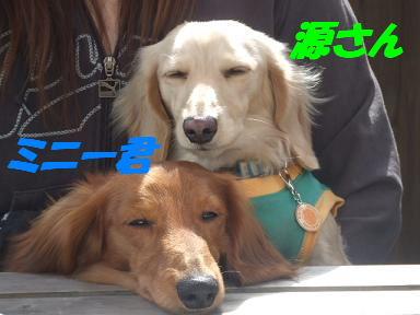 bloga-s33.jpg