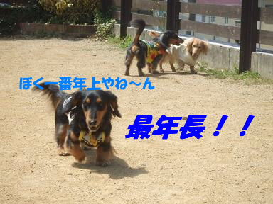 bloga-s41.jpg