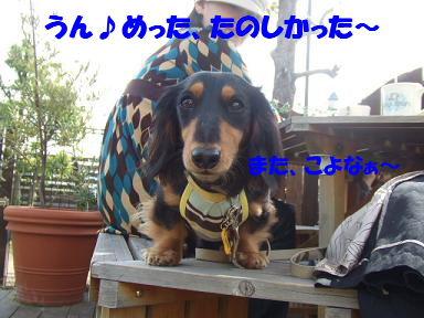 bloga-s44.jpg