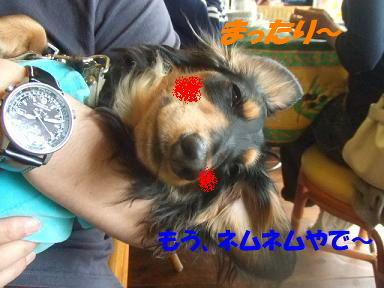 blogasiya19.jpg