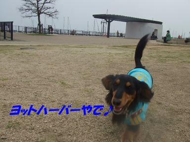 blogasiya24.jpg