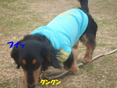 blogasiya32.jpg