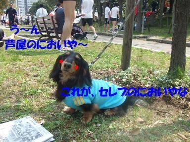 blogasiya35.jpg