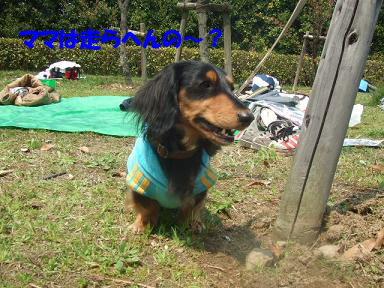 blogasiya36.jpg