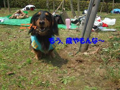 blogasiya37.jpg