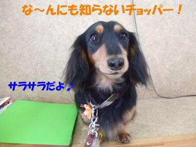 blogbd19.jpg