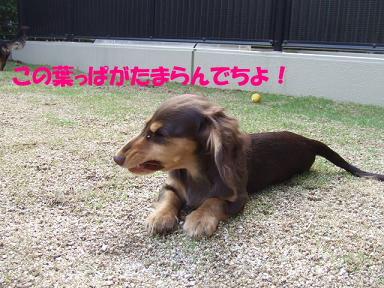 blogbusakawa02.jpg