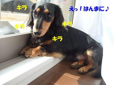 blogcho03.jpg