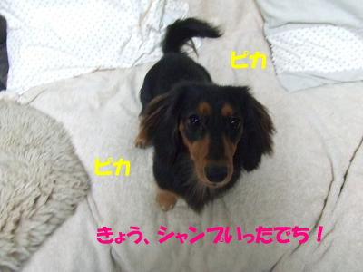 blogcorin18.jpg
