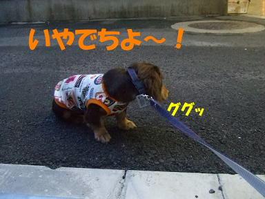 blogdebyu03.jpg