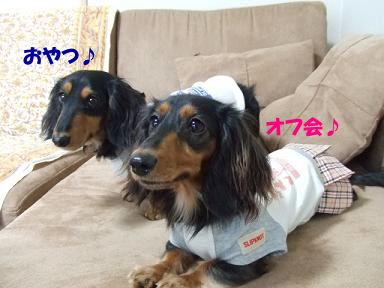blogdkr08.jpg