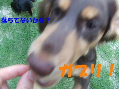 blogdot11.jpg