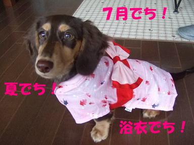 blogfuku01.jpg