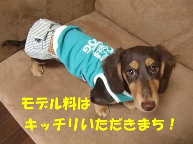 blogfuku04.jpg