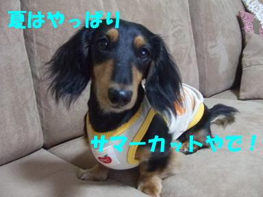 blogfuku06.jpg