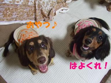 blogfuku10.jpg
