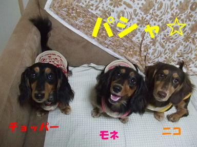 blogfuku11.jpg