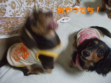 blogfuku12.jpg