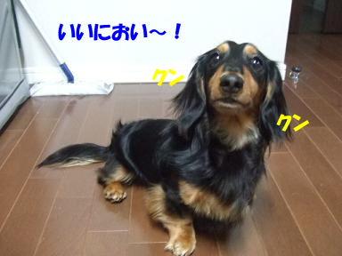 bloggohan07.jpg