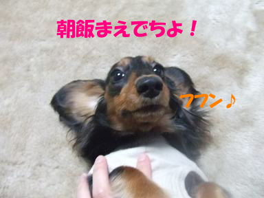 bloghakai11.jpg