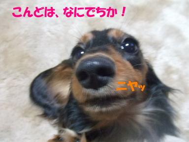 bloghakai12.jpg