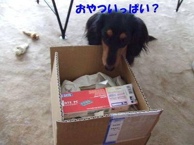 bloghako01.jpg