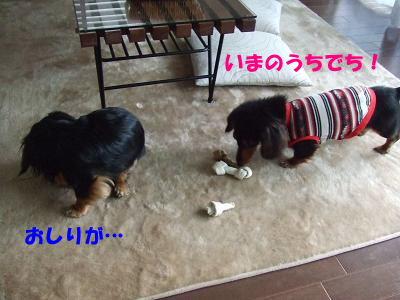 bloghako04.jpg
