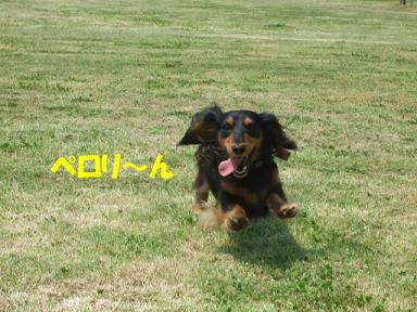 bloghikou03.jpg