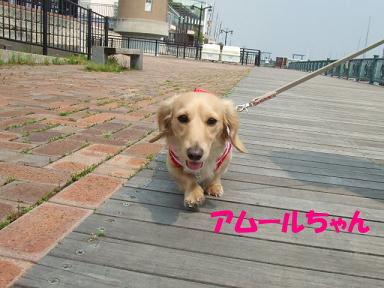 bloghikou18.jpg