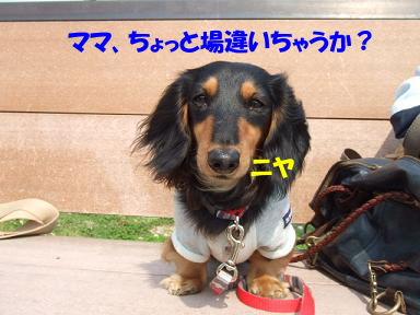 bloghikou21.jpg