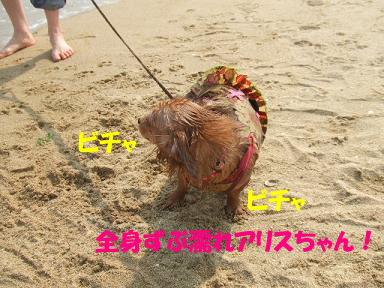 bloghikou23.jpg