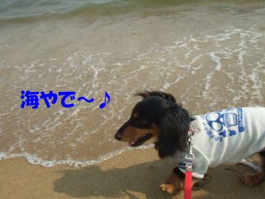 bloghikou24.jpg