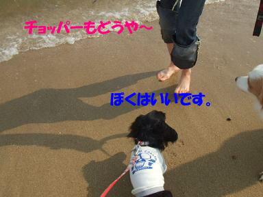 bloghikou29.jpg