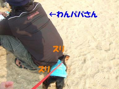 bloghikou31.jpg