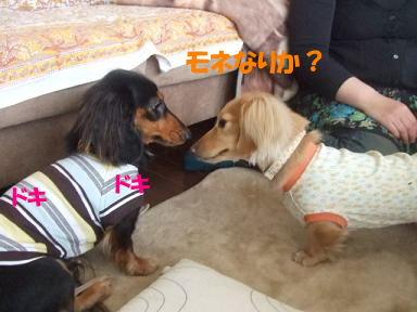 bloghinamone01.jpg