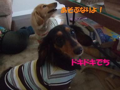 bloghinamone03.jpg