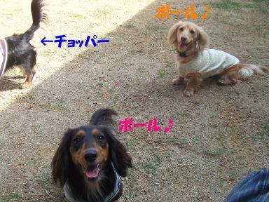 bloghinamone12.jpg