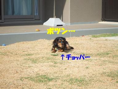bloghinamone16.jpg