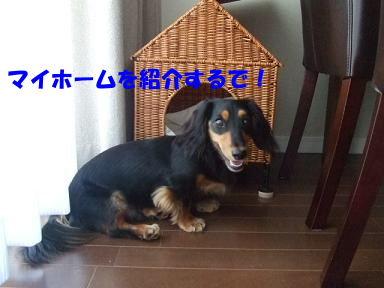 bloghome04.jpg
