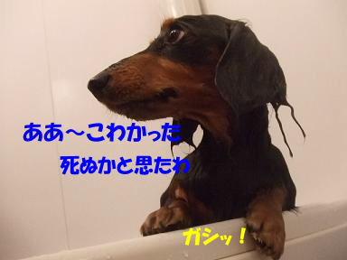 bloghuro14.jpg