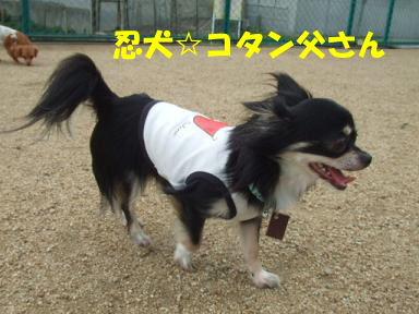 blogitami13.jpg