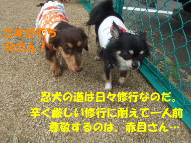 blogitami15.jpg